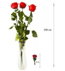 Букет из 3 красных роз  «Комплимент красотке»