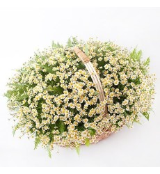 Корзина цветов со 101 ромашкой «Ромашковое поле»