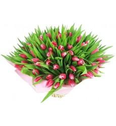 Букет из 101 розового тюльпана «Мартовские грёзы»