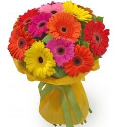 Букет из 15 разноцветных гербер «Цветное счастье»