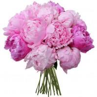 Букет из 17 розовых пионов «Розовый сон»