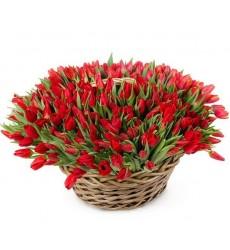Корзина цветов с 301 красным тюльпаном «Мартовский лес»