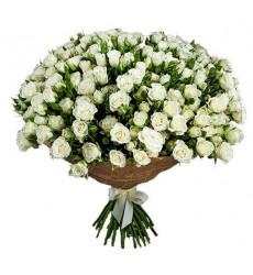 Букет из 39 белых кустовых роз «Белый жемчуг»