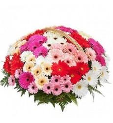Корзина цветов с 51 герберой «Шёпот счастья»