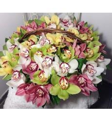 Корзина цветов с 45 разноцветными орхидеями «Море улыбок»