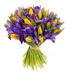 Букет из 25 ирисов и 26 тюльпанов «Воздушный поцелуй»
