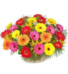 Корзина цветов с 25 герберами «Цветочная соната»