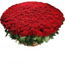 Корзина цветов с 501 красной розой и папоротником «Пьянящая любовь»