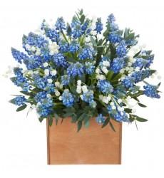 Цветы в коробке с 51 синим мускари и 25 ландышами  «Прекрасное всюду»