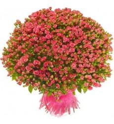 Букет из 131 розовой кустовой розы «Розовое безе»