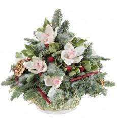 Новогодняя композиция из натурального лапника и 11 орхидей «Снежная сказка»
