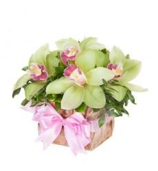 Корзина цветов с 5 орхидеями «Королевский презент»