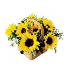Корзина цветов с 7 подсолнухами и зеленью «Солнечный напев»