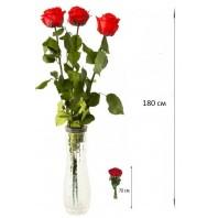 Букет из 3 красных роз «Жаркий поцелуй»