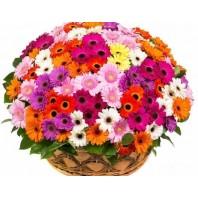 Корзина цветов со 101 герберой «Летние краски»
