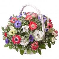 Корзина цветов с 49 разноцветными анемонами «Весенний привет»