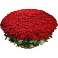 Корзина цветов с 501 красной розой «Дар богине»