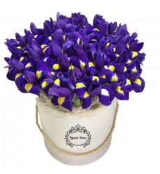 Цветы в коробке с 51 ирисом «Ультрафиолет»