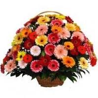 Корзина цветов с 75 герберами «Самая любимая»