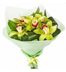 Букет из 5 зелёных орхидей «Кошачий глаз»