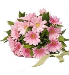 Букет из 25 розовых гербер «Хохотушка»