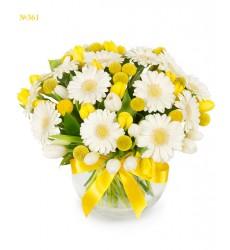 Букет из 15 гербер, 15 тюльпанов и 14 краспедий «Золотистый апрель»