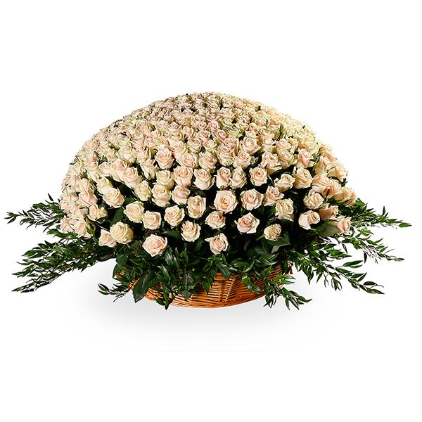 Корзина цветов из 365 роз Талея и 3 рускусов акулеатусов «Белый танец»