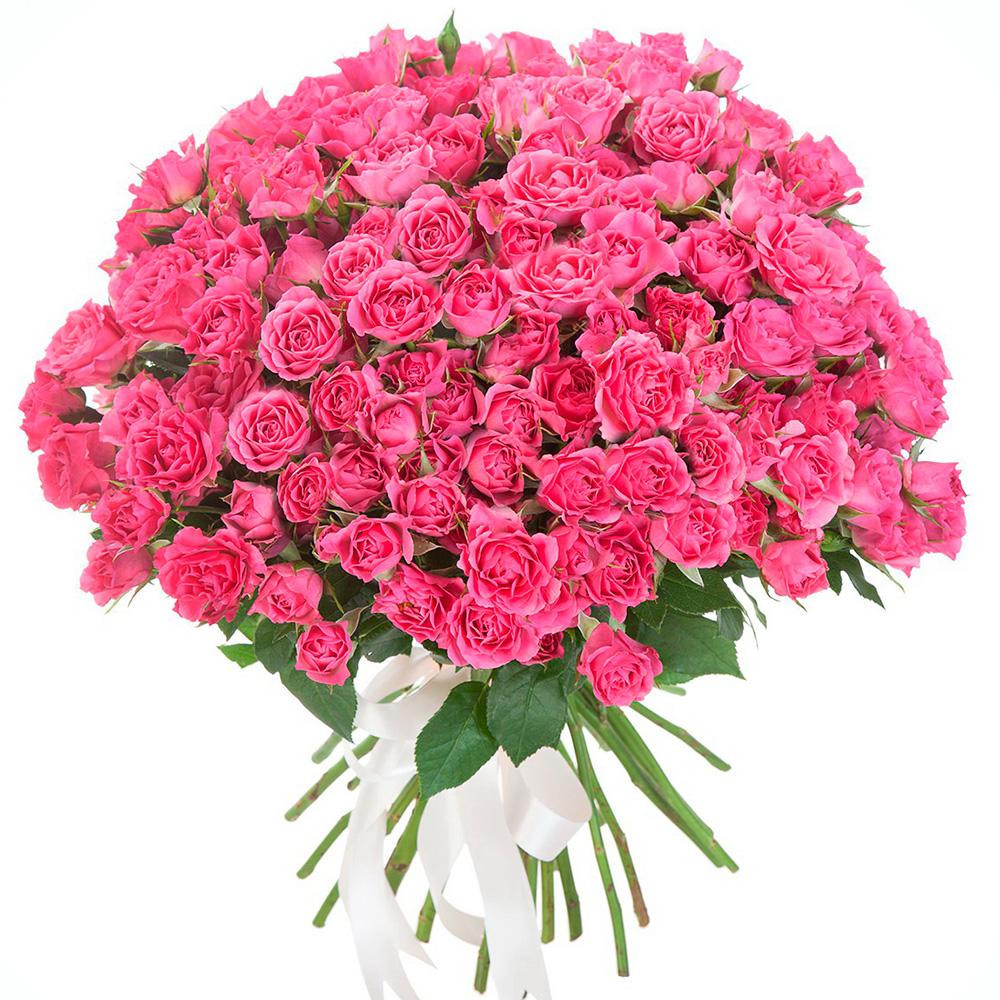 Букет из 25 кустовых роз Пинк Флэш «Розовый веер»