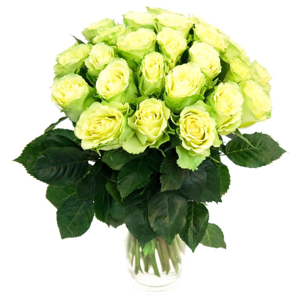 Букет из голландских зеленых роз «Очарование »