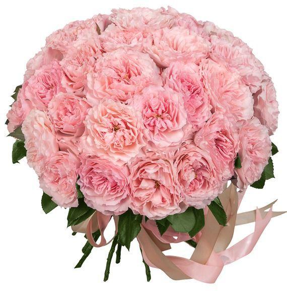 Букет из 51 пионовидной розы Mayras Rose «Майра Роуз»