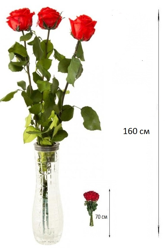 Букет  из 3 роз 160 см. «Василина»