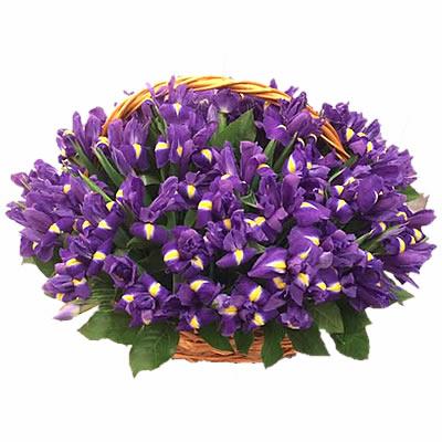 Корзина цветов с 51 ирисом «Фиолетовая ночь»