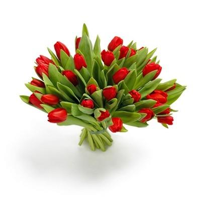 Букет из 33 красных тюльпанов «Весна в Голландии»